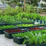Chống thấm sân thượng để trồng cây đảm bảo an toàn 100%