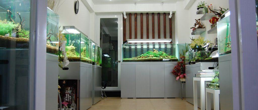 vị trí đặt hồ cá trong nhà ở phòng thờ