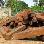 Gỗ Lim xanh, gỗ lim Nam Phi... Phân biệt gỗ Lim Lào và Lim Nam Phi